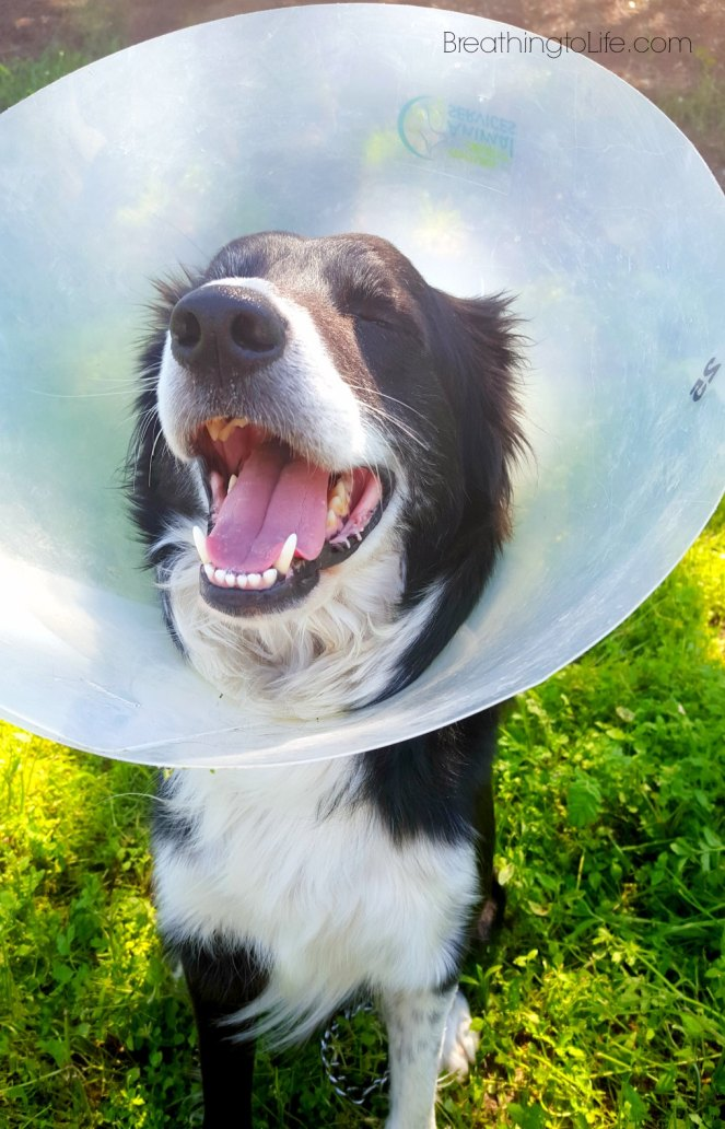 happyconedogsm