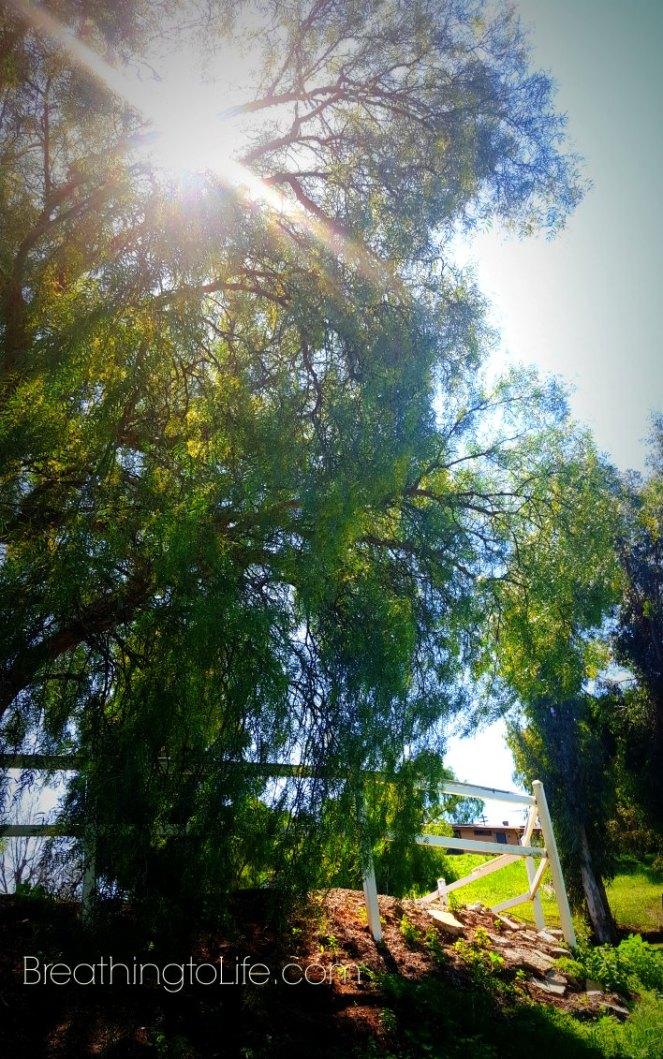 sunflaretreesm